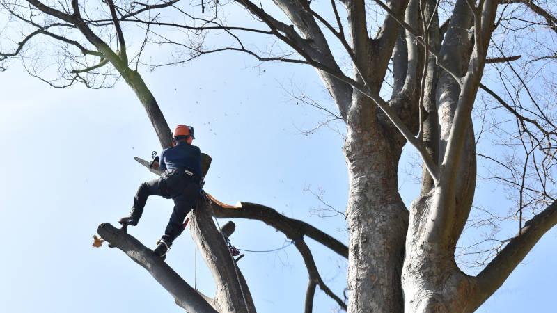 植木・樹木の伐採