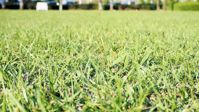 庭の草刈り、芝刈り、敷き砂利、芝生張り