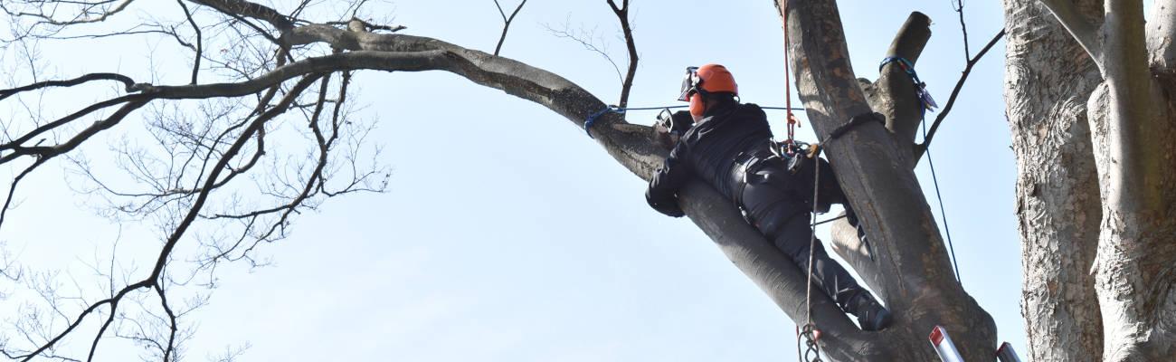 伐採・剪定サービスイメージ1
